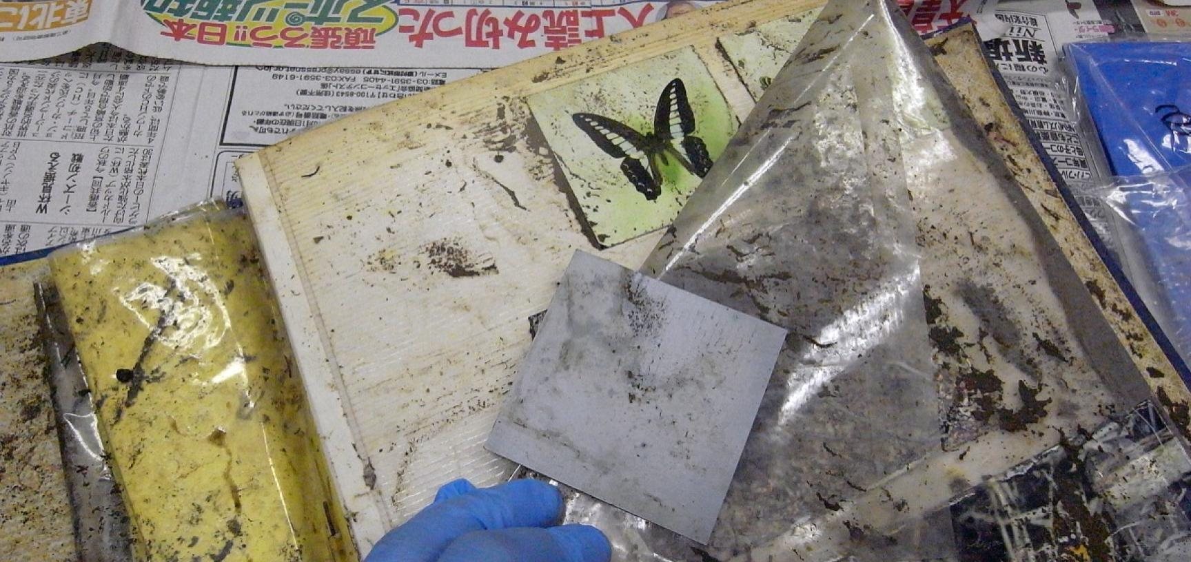 Removing prints from a damaged album. (Copyright RD3 Project/Rikuzentakata City Museum)