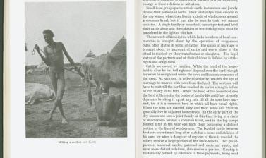 plate iii the nuer