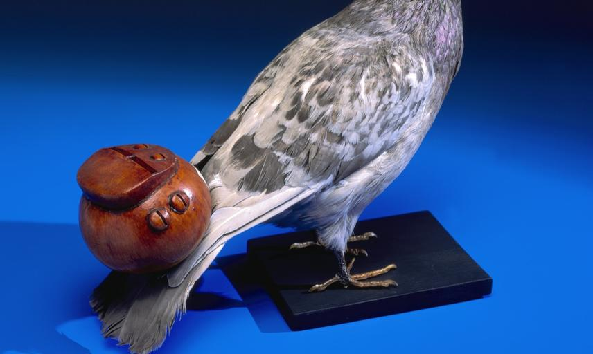 Pigeon whistle, being a type of Aeolian flute; when attached to a flying bird, it formed part of an aerial orchestra.